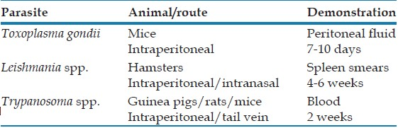 Table 7: Animals used for <i>in vivo</i> cultivation of parasites